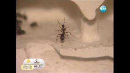 Здравей, България (nova Tv), 03.01.2012 Мравки