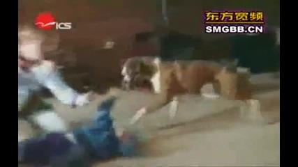 Смешни инциденти с животни