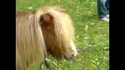 malkoto poni