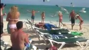Луди чайки шашкат хората на плажа