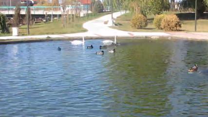 Самоков - Крайречен парк