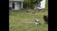Куче срещу овца