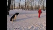 Ето как куче не се поколеба и за миг да защити стопанката си от нападение!