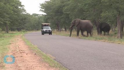 Zimbabwe Exports Elephants to China to Raise Funds Despite Protest