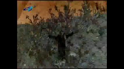 Ахат - Черната овца