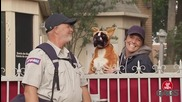 Смях ! Пощальон взривява зло куче - Скрита Камера