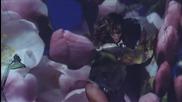 Rihanna - We Found Love (fеаt. Calvin Harris)