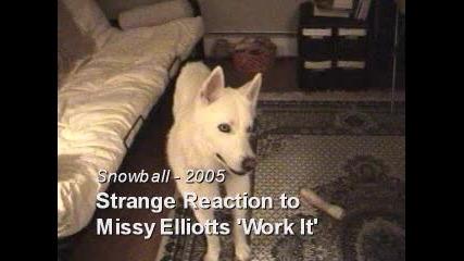 Куче Се Държи Странно На Песен На Missy