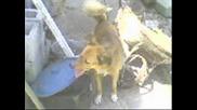 кучето алекс