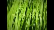 Minuscule - Еп 20 - Мравунякът