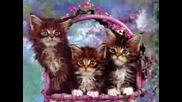 Животни - Сладки, Смешни, Красиви...