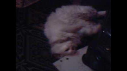 Котката Ми Пухла