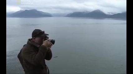 Световно известен фотограф снима мечките