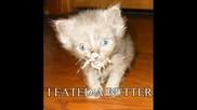 Компилация Смешни Снимки На Котки