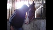 Like A Horse !~
