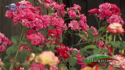 Картини от България - Долината на розите