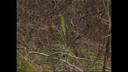 Лов На Диво Прасе В Етрополе ( 5 Част)