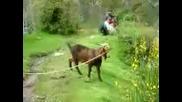 Преграxнал козел