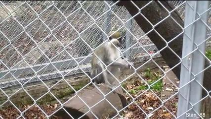 Посещение в айтоския зоопарк