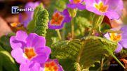 Честит празник на всички носещи имена на цветя!