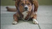Колко би чакало едно куче своя стопанин пред болницата?