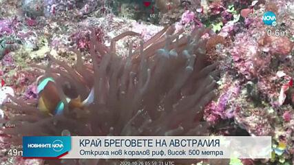 """Учени откриха коралов риф, по-висок от """"Емпайър Стейт Билдинг"""""""