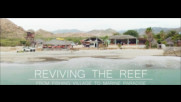 Reviving the Reef