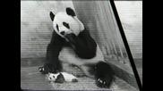 Бебето На Пандата Киха