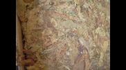 Bg Tolacoo-skrabs,izmir,barley