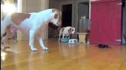 Какво се случва , когато куче срещне механичен паяк !