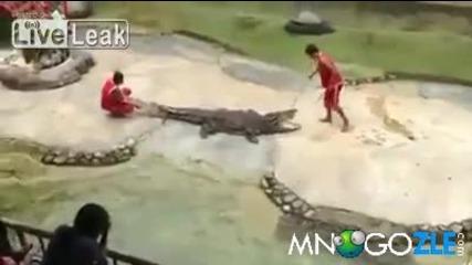 На крокодил му писва от игрички