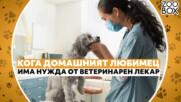 5 знака, които сигнализират, че домашният любимец има нужда от ветеринар