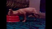 Куче яде на два крака - Съни