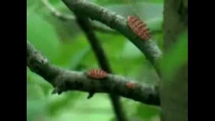 Чудати Растения