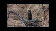 Подпийнали животни с амарула :)