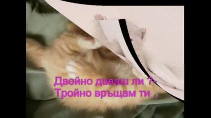 *~*~sladki*~kotenca*~*~