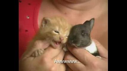 Котка Осиновява Зайче