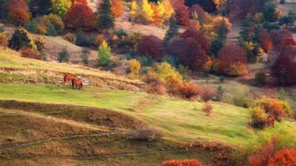 15 любопитни факта за есента