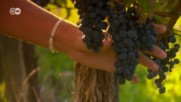 За виното - повече от една истина