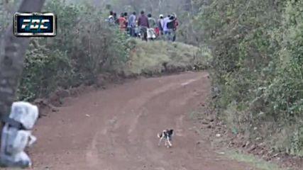 Бездомно куче извади най-големия късмет в живота си!