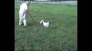 Какви базици си правят хората и животните
