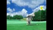 Лудата Мечка - Golf