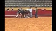 Тренировка на ръгбисти с истински бик