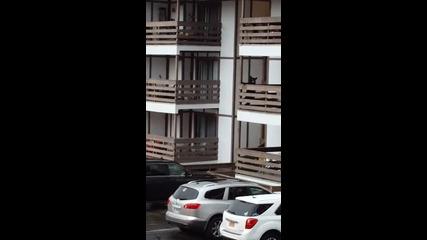 Гладна мечка се катери по балкони
