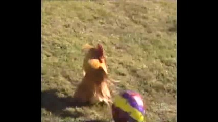 Australias Funniest Home Videos