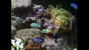 Золотая рыбка - Елена Ваенга