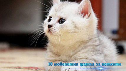 10 любопитни факта за котките.