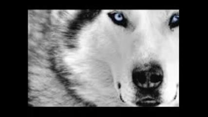 Бате Пешо & Тина - Wolf