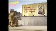 Friskies - Реклама На Котешка Храна