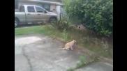 Котка - нинджа vs. птичка!